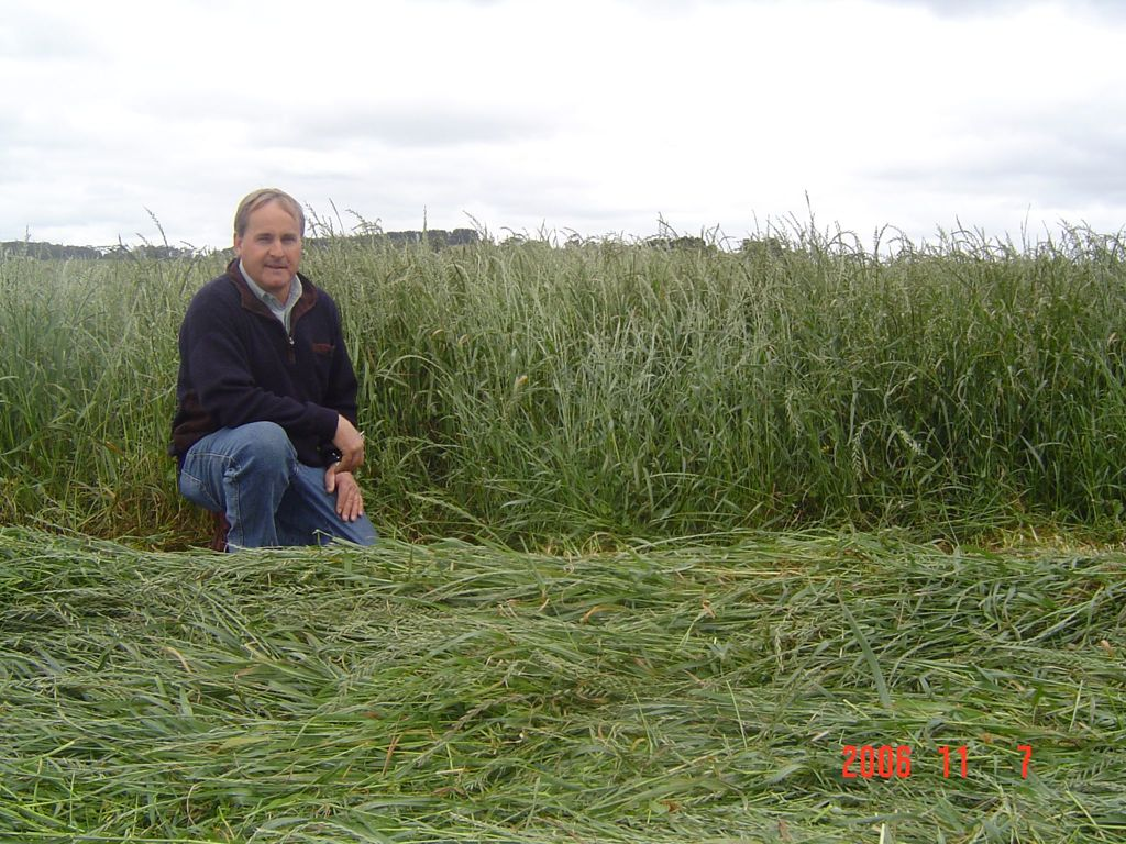 Silage crop - green to the ground.