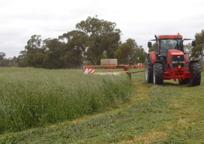 Contractor commented this was the heaviest silage he had cut for the year!